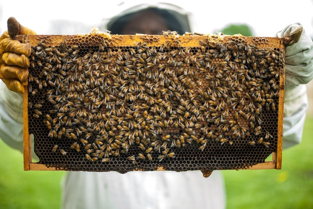 Person Holding a Beekeeping Starter Kit