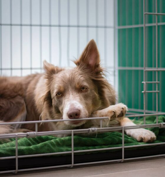 How to Soundproof a Dog Crate