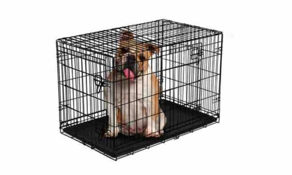 how to make your dog crate escape proof